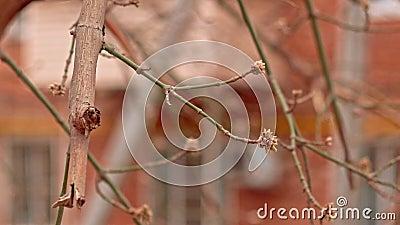 Bunte bloße Zweige auf Wind im Herbst stock video
