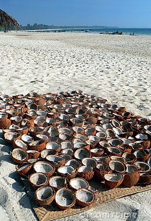 Burma. Coconut Shells Drying