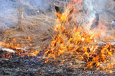 Burn off dry grass