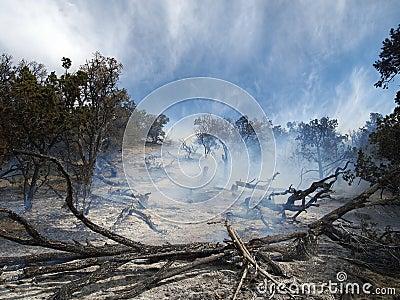 Burned Area