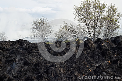 Burned grass residues