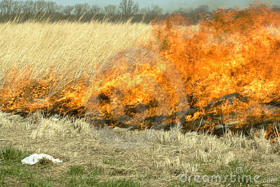Burning field of grass
