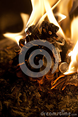 Burning fir cone