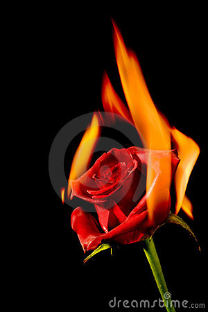 royalty free stock photo burning love image 7628455 burning love 300x450