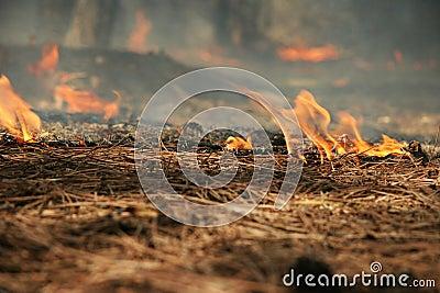 Burning needles