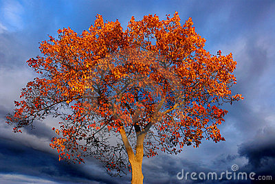 Burning orange tree, dark sky