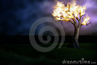 Burning Tree
