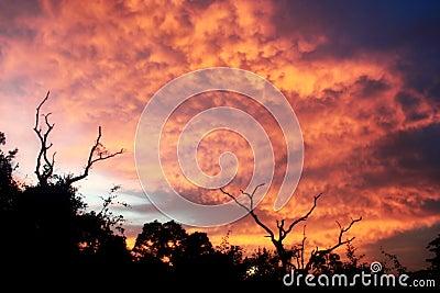 Burnning Sky
