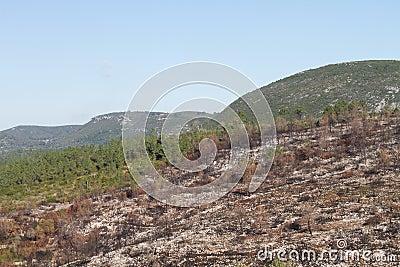 Burnt hills