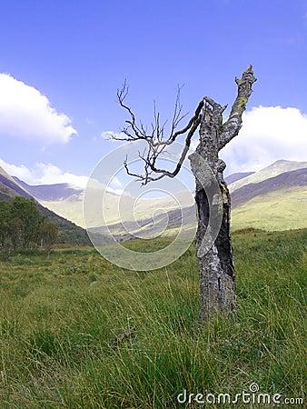 Burnt tree on a hill