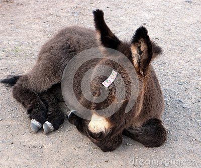 Burro is too young for carrots