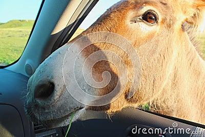Burrow In Car Window