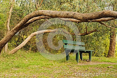 Bush in blossom and bench