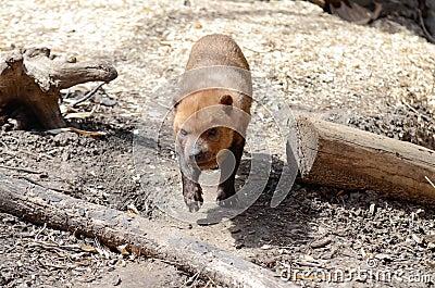 Bush dog2