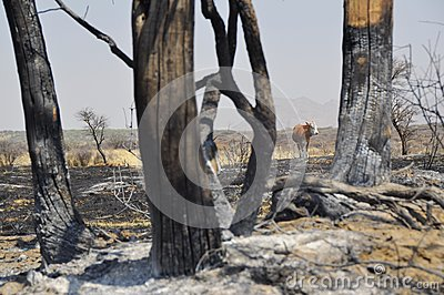 After bush fire