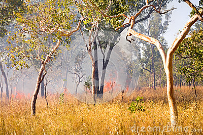 Bush Fire in Outback Australia