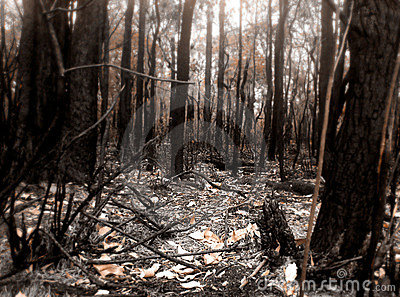 Bush Fire Scene Stock Photo