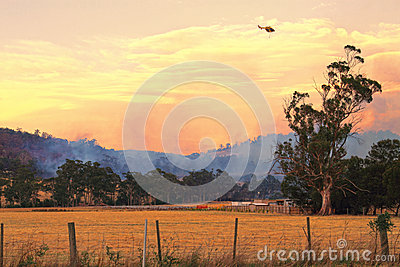 Bush fire Tasmania Editorial Stock Image