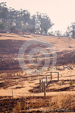 Free Bush Fire Tasmania Stock Images - 28495094