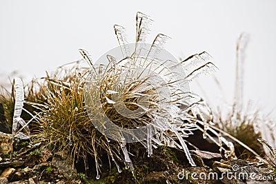 Bush of grass