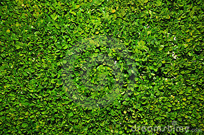 Bush green background