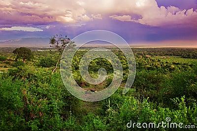 Bush het landschap in van tanzania afrika royalty vrije stock foto afbeelding 28557305 - Bush architectuur ...