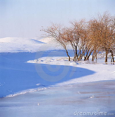 Free Bush In The Frozen River Stock Image - 14192131