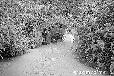 Bush Lined Trail