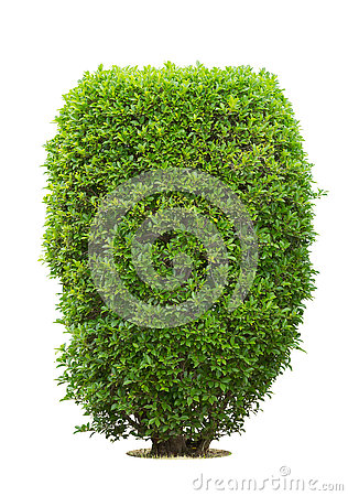 Free Bush Or Shrubs Isolated Royalty Free Stock Image - 76359546