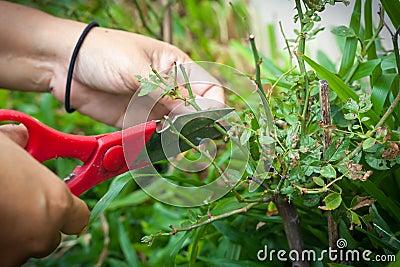 Bush scissors