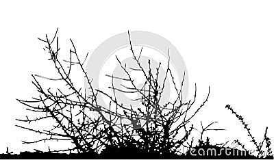 Bush / silhouette / vector