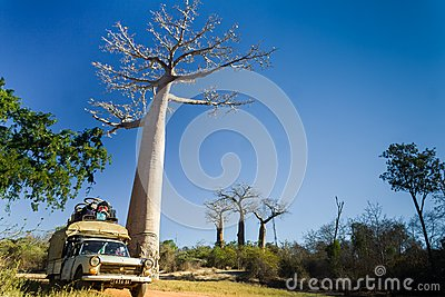 Bush taxi and baobab Editorial Photo