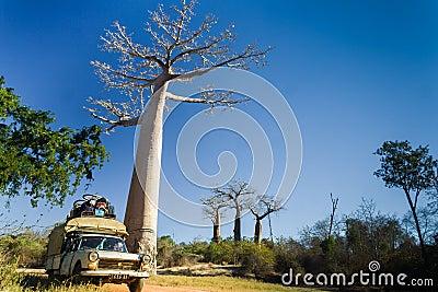 Bush taxi and baobab Editorial Photo