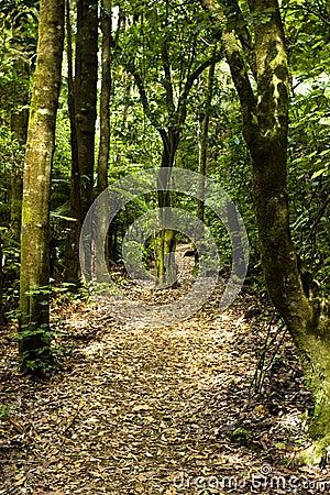 Free Bush Walk - New Zealand Stock Photography - 48508742