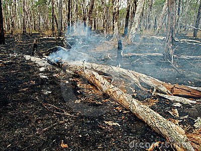 Bush / Wild fire