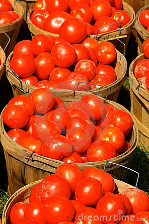 Free Bushels Of Tomatoes Royalty Free Stock Images - 15864319