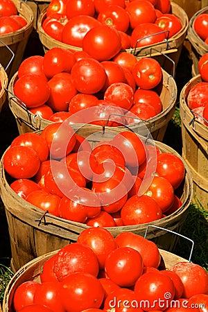Bushels of Tomatoes