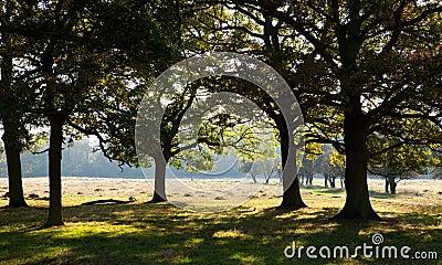Bushy Park, Middlesex