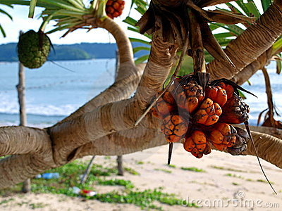 Bushy Trees Beach Fruit