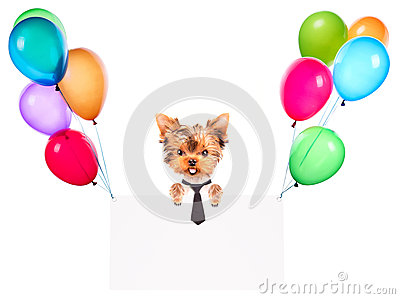 Business dog holding banner with balloons