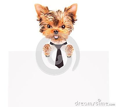 Business dog holding banner