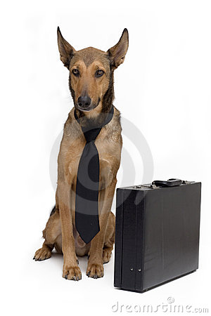 Free Business Dog With Suitcase Stock Photos - 1936283
