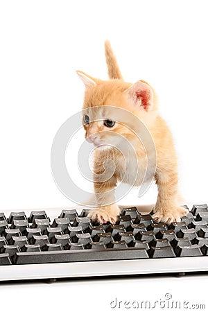 Free Business Kitten Working �n Keyboard Stock Photos - 7238863