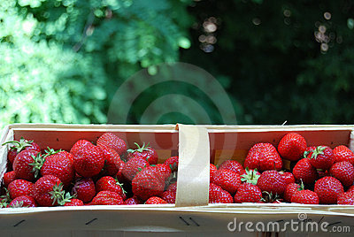 Busket of strawberryes