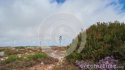 Buskett ogródy, Siggiewi, Malta zbiory