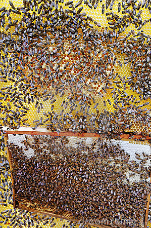 Busy bees.