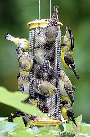 Free Busy Bird Feeder Royalty Free Stock Photo - 9787015