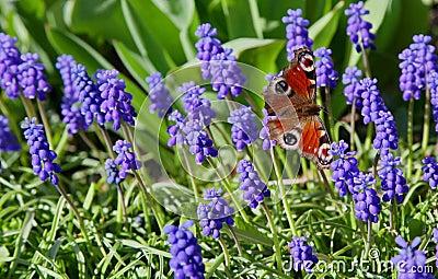Buterfly in garden