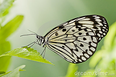 buttefly on a leaf