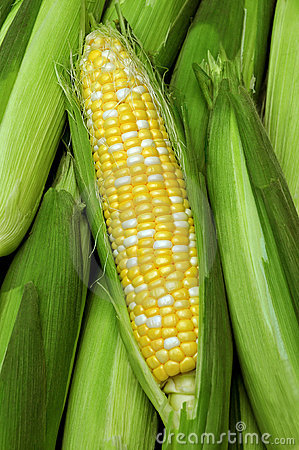 Free Butter And Sugar Corn Royalty Free Stock Photography - 15195397